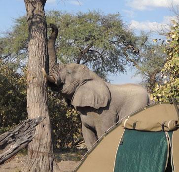 elephantShakingTree.sm