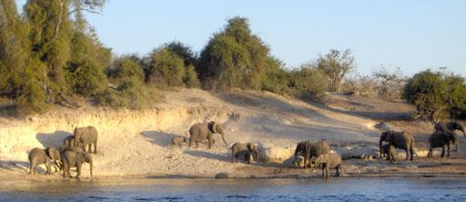 elephantsChobe2.sm