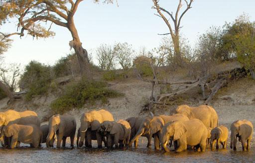 elephantsDrinking2.sm
