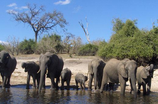 elephantsDrinking3.sm
