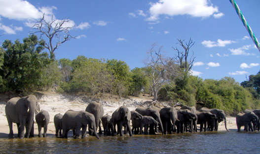 elephantsDrinking4.sm